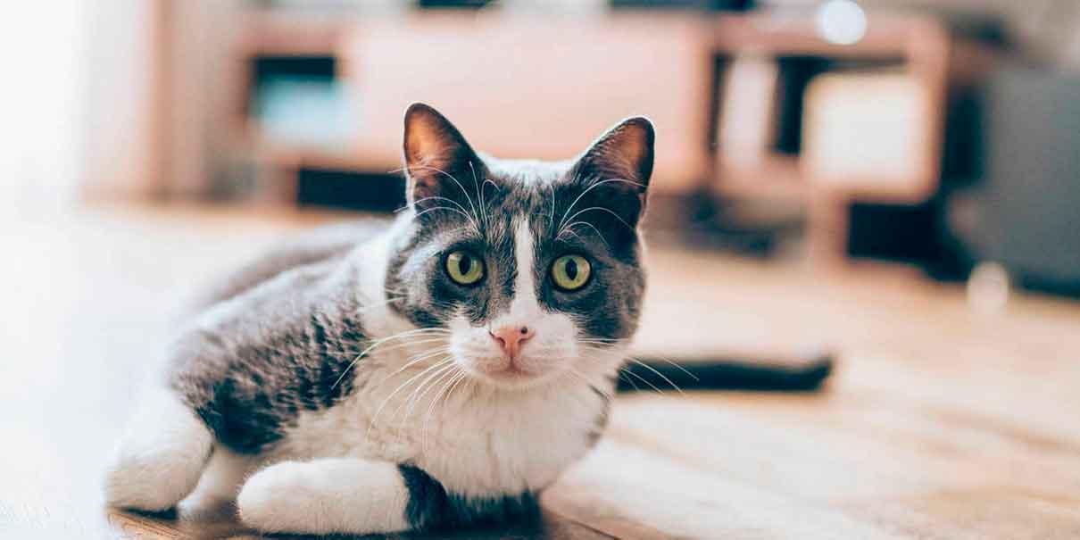 VIRAL. Este gato sabe tocar el timbre de las casas