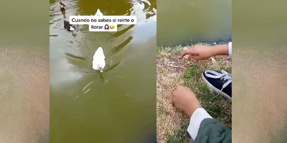 """""""Chau rana. Bienvenida a tu nuevo hogar"""" el pequeño despide a su amigo que despues seria atacado por un pato."""