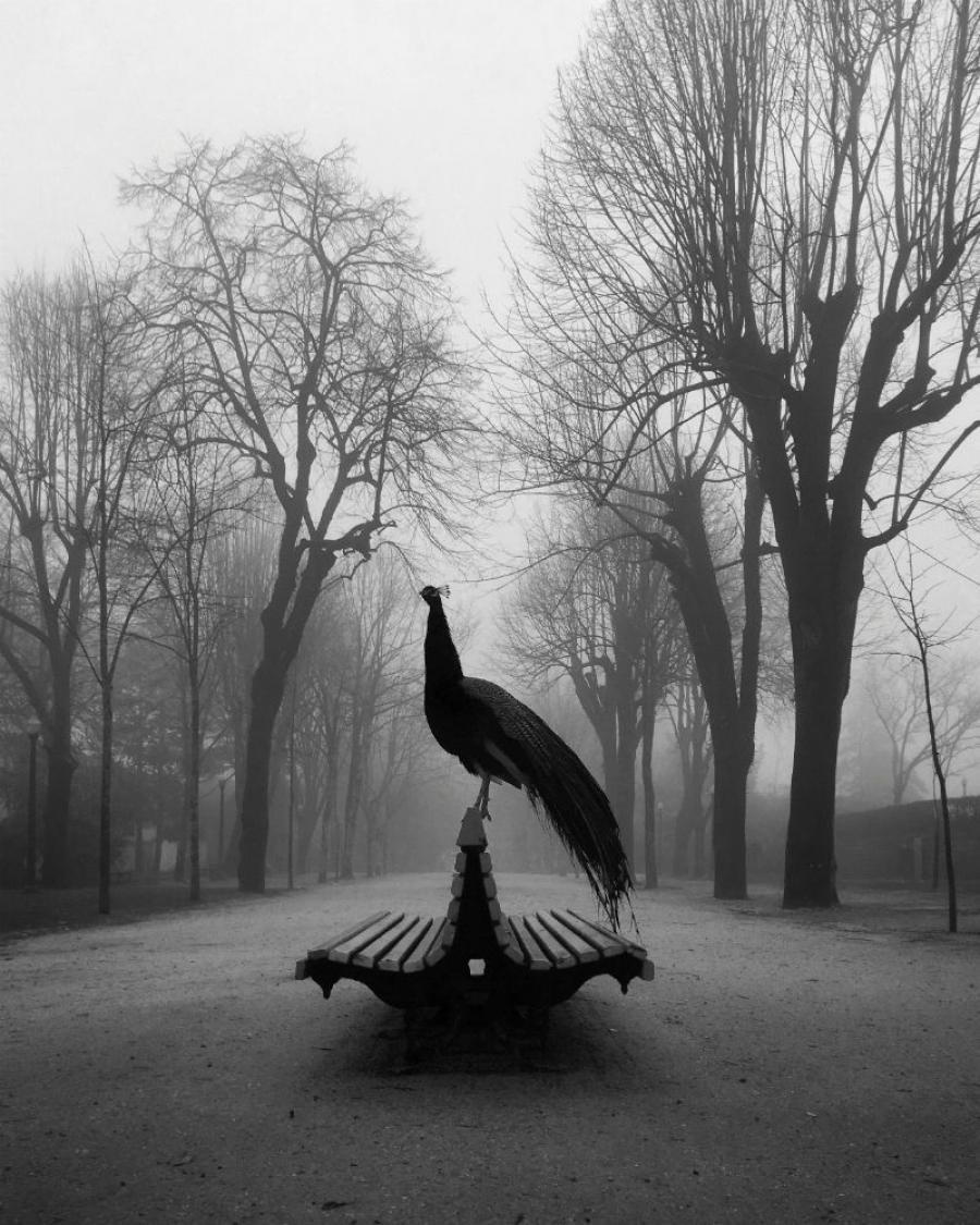 """""""The Proud Peacock"""", tomada en Porto, Portugal, con un iPhone SE. Diogo Lage (Portugal)"""