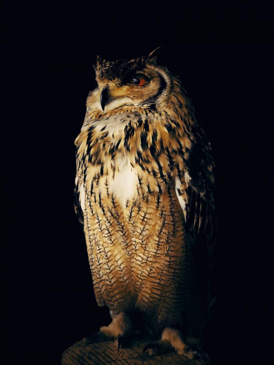 """""""Owl"""", tomada en Kisarazu, Japón, con un iPhone X. Yoichi Sato (Japón)"""