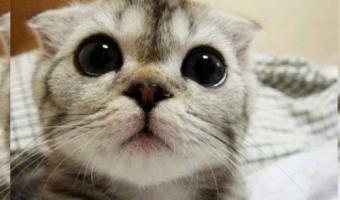 Este gato se volvió viral gracias a sus pasos de baile
