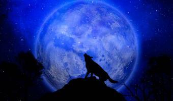 Este 28 de enero se verá Luna de Lobo