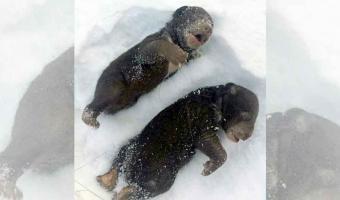 MUEREN CONGELADOS cientos de animales en santuario de Texas por mal heladas