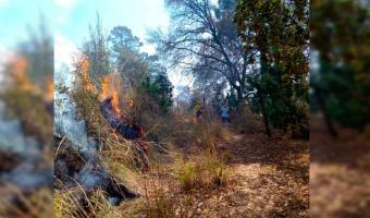 Arrasa incendio forestal comunidades de La Cañada, Pedernales y Titimilco